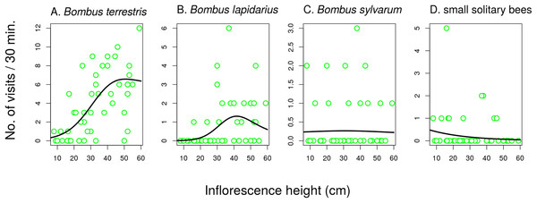 The effect of inflorescence height on visitation of Salvia verticillata by different insects.