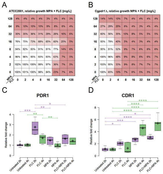 Role assessment of PDR1 and CDR1 for the antagonism in the drug combination of FLC + MPA against C. glabrata ATCC 2001.