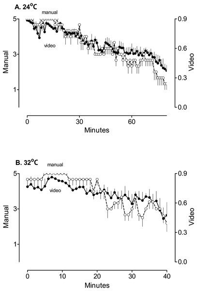 The comparison of the results of the manual scoring and automatic analysis of the position on the treadmill.