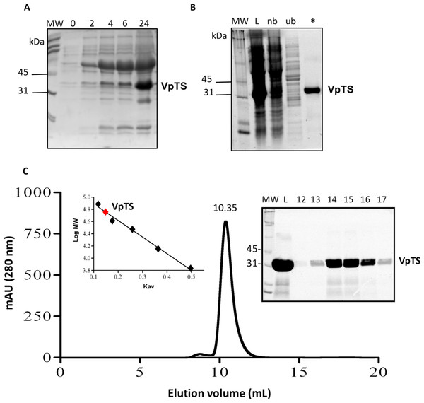 Recombinant expression and purification of VpTS.