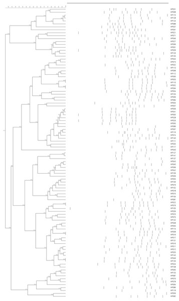 ERIC-PCR dendrogram of 99 H. parasuis field isolates.