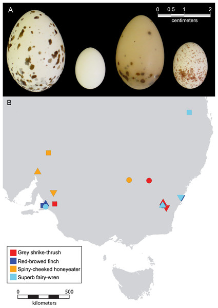 Photograph of eggs and geographical range of clutches included in this study.