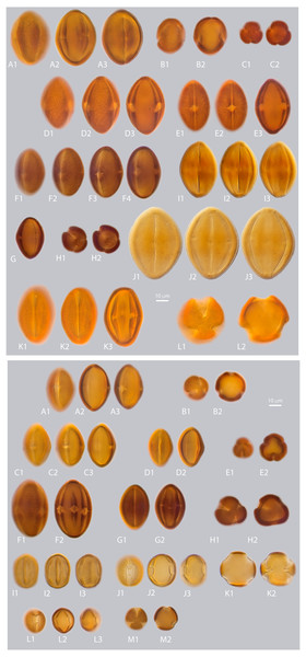 a. LM micrographs of recent Nitraria and Peganum pollen. Specimen courtesy and England Finder reference are given for each specimen.