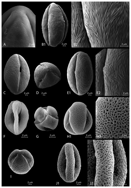 SEM micrographs of extant Nitraria and Peganum pollen. Location of photograph indicated.