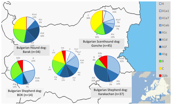 Mitochondrial DNA haplogroup distributions in three native and one modern Bulgarian dog breeds.