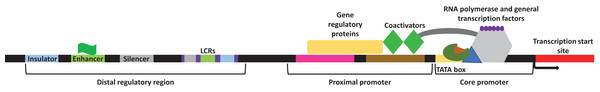 General representation of transcriptional regulatory elements.