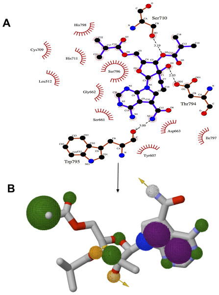 Significant pharmacophoric elements of NITD-203 for the design of target-specific inhibitors of DENV RdRp (A) shows intermolecular interactions of active site residues with NITD-203 (B) shows pharmacophore model, hydrophobic regions are depicted in green, hydrogen donor/acceptor in yellow and aromatic rings in purple.