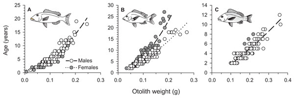Sex-specific relationships between sagittal otolith weight (g) and annual age (as number of annuli) for (A) L. xanthochilus, (B) L. gibbus, and (C) L. rufolineatus from Tutuila, American Samoa.