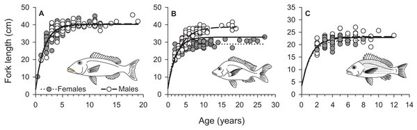 Sex-specific and combined von Bertalanffy growth curves of (A) L. xanthochilus, (B) L. gibbus, and (C) L. rufolineatus from Tutuila, American Samoa.