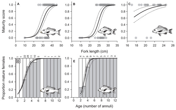 Female maturation schedules by fork length fitted to maturity status data for (A) L. xanthochilus, (B) L. gibbus, and (C) L. rufolineatus from Tutuila, American Samoa.