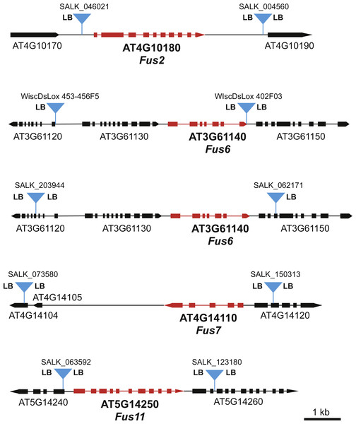 Maps of FUS loci used in this genetic screen.
