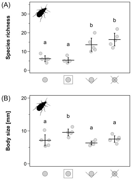 Carabid beetle species richness (A) and community weighted mean body size within the carabid assemblages (B) for the four different pitfall trap types.