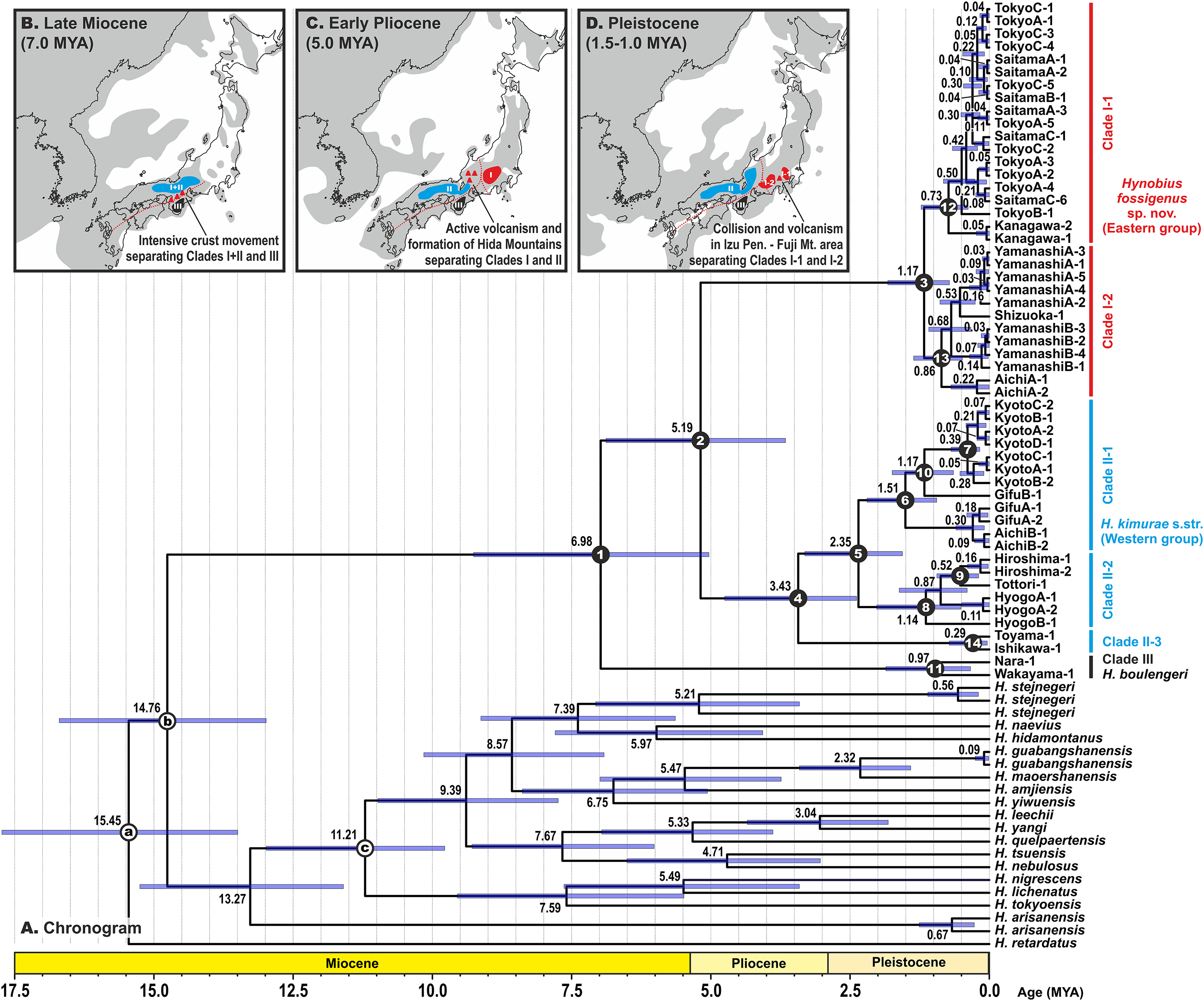 An integrative taxonomic analysis reveals a new species of