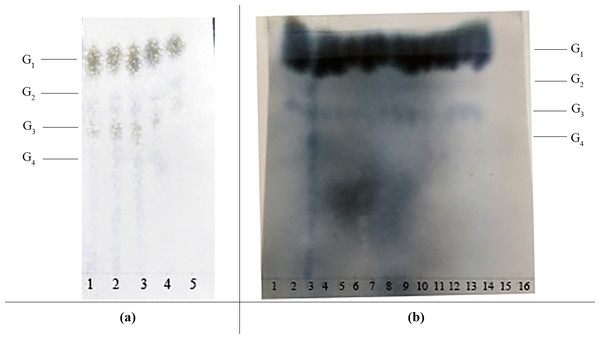 The effects of various saccharification conditions on IMO content.