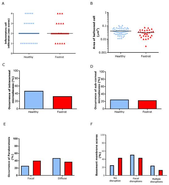 Epidermal histological lesions of ovine interdigital skin basal membrane integrity.