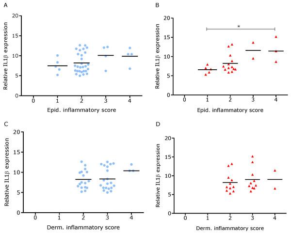Comparison between IL-1βmRNA expression and epidermal and dermal inflammatory score in ovine interdigital skin.
