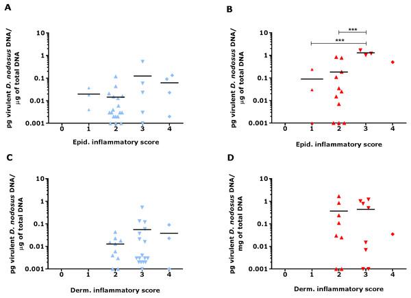 Virulent D. nodosus DNA levels in comparison to inflammatory scores in epidermal and dermal ovine interdigital skin.