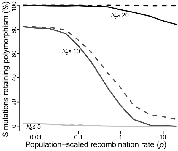 Proportion of simulations where polymorphism is retained after 50 Ne generations, for varying values of selection (Nes of five, 10 or 20) and recombination (ρ ranging from 0.005 to 20).