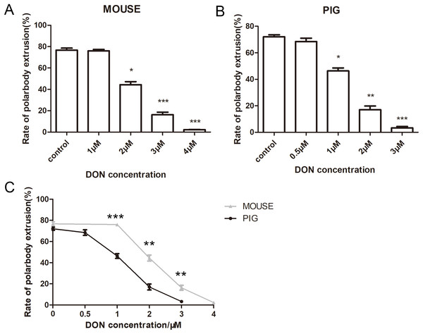 The effects of DON on the oocyte maturation.