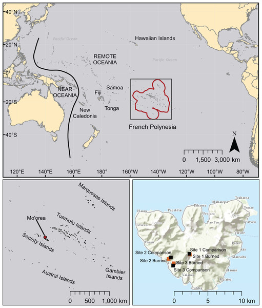 Map of the Pacific region showing French Polynesia (red outline), the island of Mo'orea, and the location of field sites.