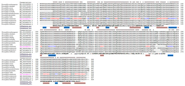 The multiple alignments of protein sequences retrieved from the NCBI repository with conserved domain architecture with DNMT2 methyltransferase in D. melanogaster.
