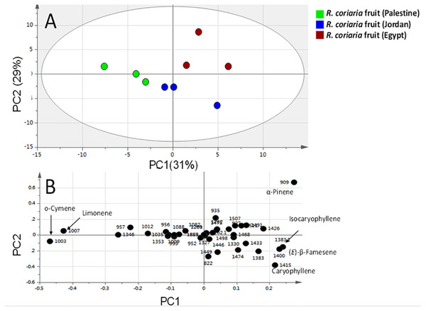 Principal component analyses of fresh R. coriaria fruit (sumac) from three Middle East sites analyzed by SPME-GC–MS (n=3).