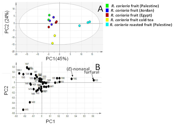 Principal component analyses of fresh, roasted and cold tea Rhus coriaria fruit (sumac) analyzed by SPME-GC–MS (n=3).
