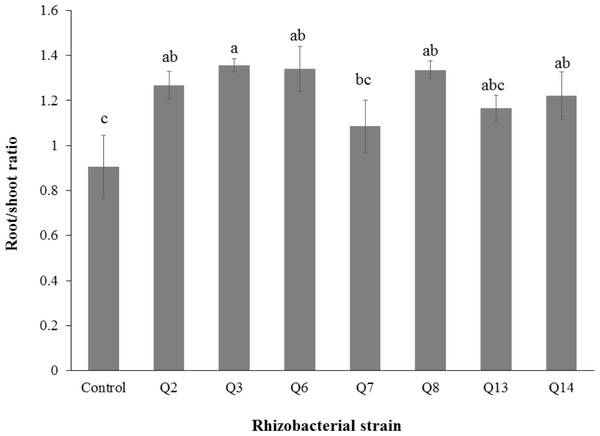 Effect of phosphate solubilizing rhizobacteria on root/shoot ratio of cotton seedlings.