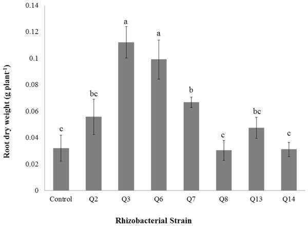 Effect of phosphate solubilizing rhizobacteria on the root dry weight of cotton seedlings.