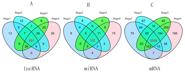 Venn diagram of aberrant expression profiles of lncRNAs (A), miRNAs (B) and mRNAs (C) between stage I RCC group (tumor tissues according to AJCC)/control group (non-tumor tissues), stage II group/control group, stage III group/control group, and stage IV group/control group.