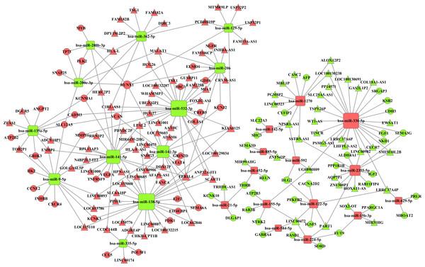 The miRNA-lncRNA-mRNA ceRNA network is composed of 106 lncRNAs, 26 miRNAs and 69 mRNAs.