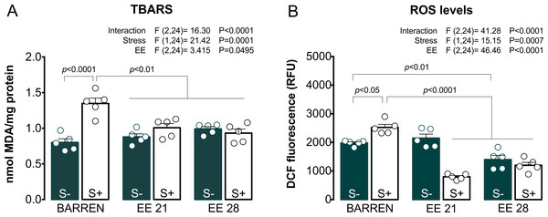 Effects of enriched environment for 21 (EE 21) or 28 days (EE 28) on biochemical parameters associated with oxidative stress in zebrafish brain submitted to unpredictable chronic stress (S+) or not (S−).