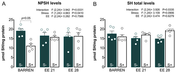 Effects of enriched environment for 21 (EE 21) or 28 days (EE 28) on antioxidant mechanisms in zebrafish brain submitted to unpredictable chronic stress (S+) or no (S−). Non-protein thiols (NPSH) and Total thiol (SH) levels.