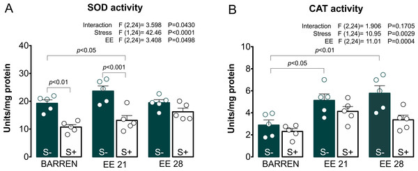 Effects of enriched environment for 21 (EE 21) or 28 days (EE 28) on antioxidant mechanisms in zebrafish brain submitted to unpredictable chronic stress (S+) or no (S−).