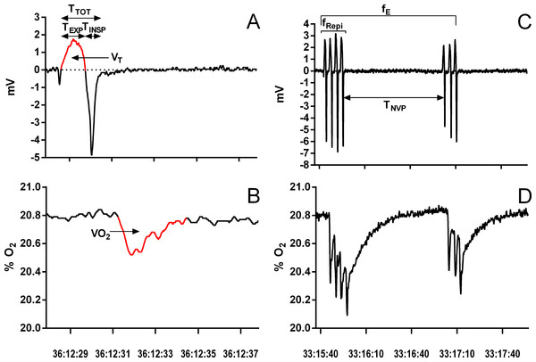 Example of a single ventilatory cycle and episodic ventilation in Chelonoidis carbonarius during normoxia showing respiratory variables measured.