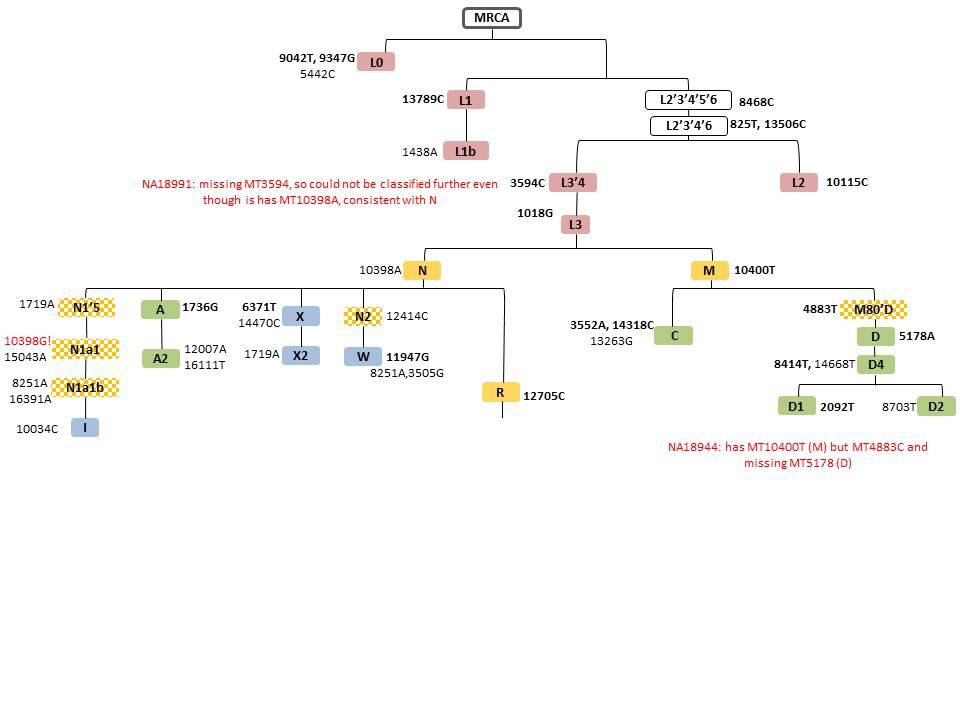 Hi-MC: a novel method for high-throughput mitochondrial