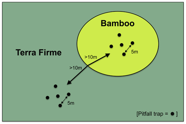 Sampling scheme of paired sites in bamboo and terra firme forest.