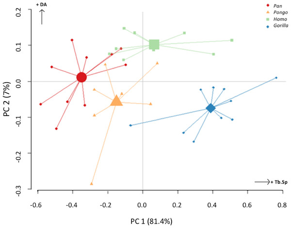 Results of principal components analysis of three trabecular variables (Tb.N, Tb.Sp. and DA) in all analysed regions.