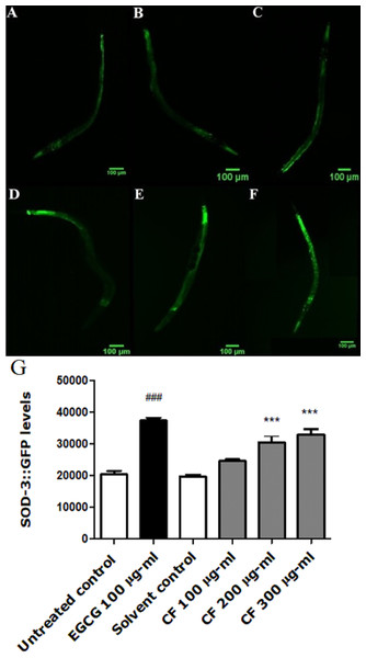 Effect of C. fistula extract on SOD-3 expression in C. elegans.