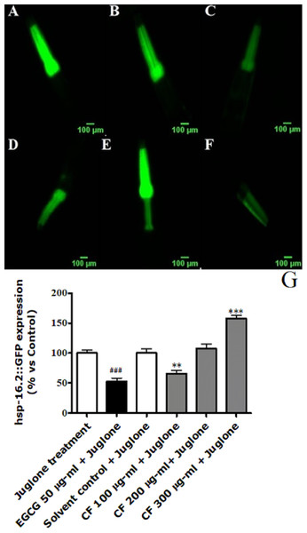 Effect of C. fistula extract on HSP-16.2 expression in C. elegans worms exposed to oxidative stress induced by juglone.