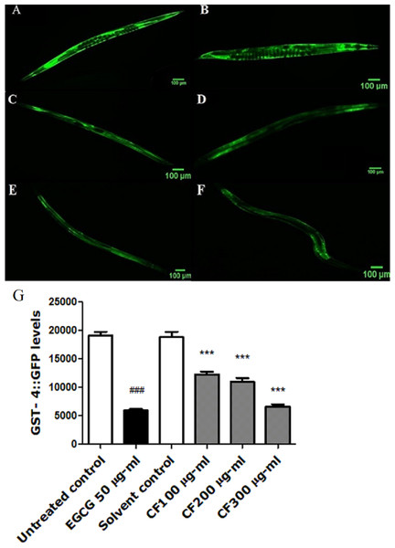 Effect of C. fistula extract on GST-4 expression in C. elegans.