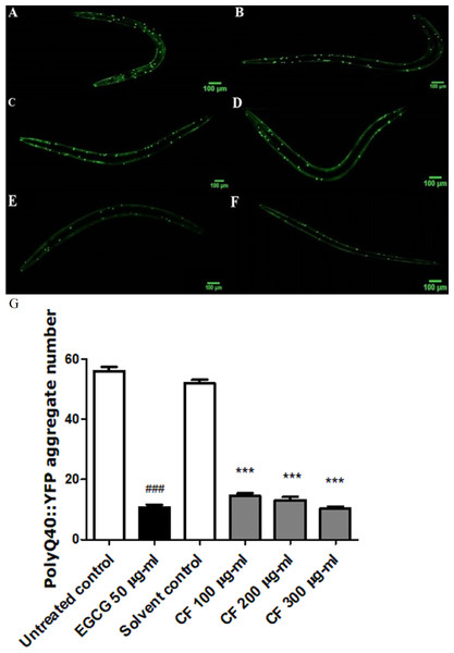 Effect of C. fistula extract on polyQ40 aggregate formation in C. elegans.