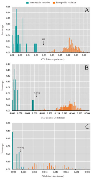 Distribution of intra- and interspecific pairwise genetic distance (p-distance) based on (A) COI, (B) ND2 and (C) 28S data set.