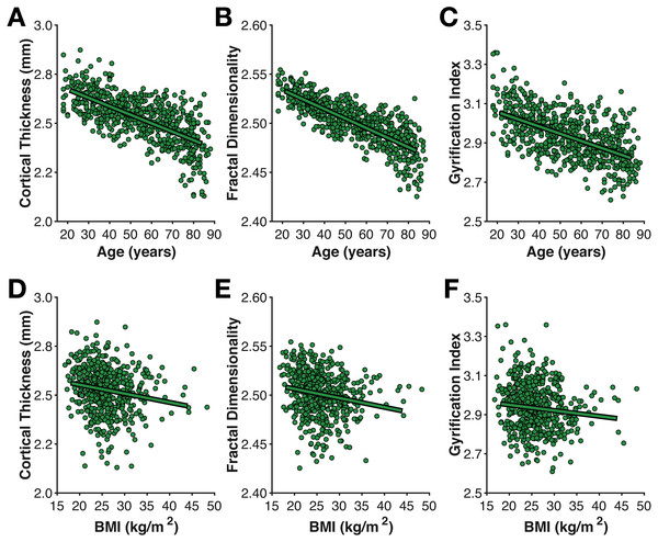 Age- and BMI-related differences in the three cortical morphology measures examined here: (A, D) thickness, (B, E) fractal dimensionality, and (C, F) gyrification.