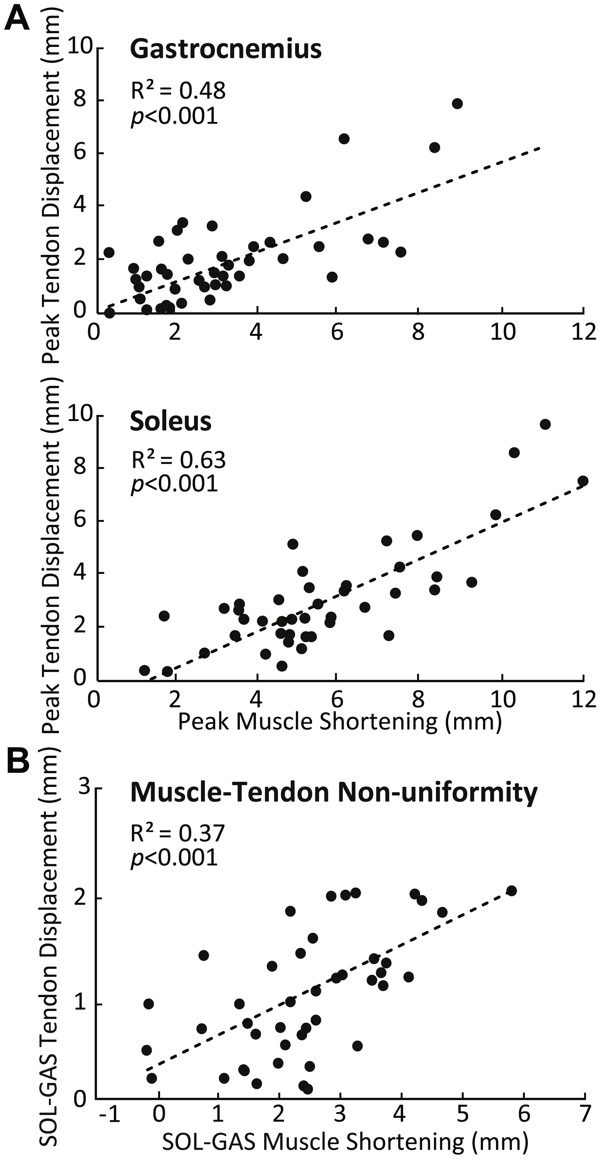 Do triceps surae muscle dynamics govern non-uniform Achilles tendon ...