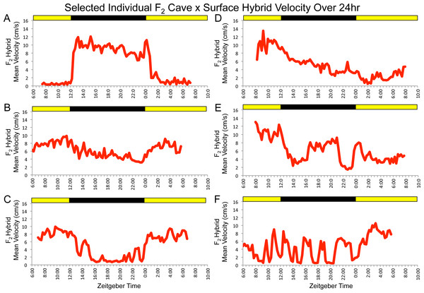 F2 surface x Pachón hybrids show a wide array of parental and non-parental activity patterns.
