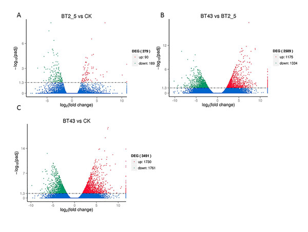Volcano plots comparing differentially expressed genes (DEGs).