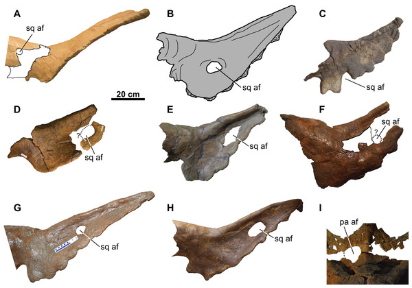 Distribution of accessory fenestrae in the parietosquamosal frill of chasmosaurines from the Dinosaur Park Formation and age-equivalent sediments of Alberta.