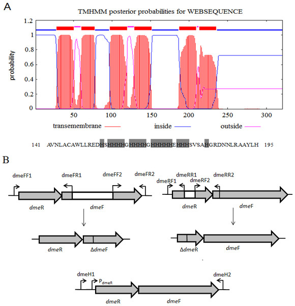 Gene organization of S. meliloti CCNWSX0020 dmeRF and transmembrane structure of.