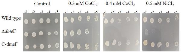 Sensitivity of wild type and dmeF mutant to cobalt/nickel.